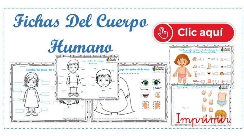 Fichas Partes Del Cuerpo Humano Para Niños Imprimir Ayuda Docente