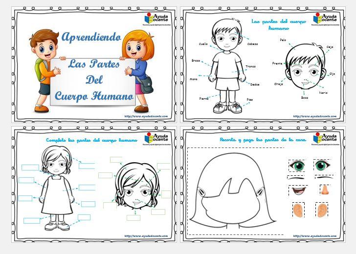 Fichas partes del cuerpo humano para niños IMPRIMIR